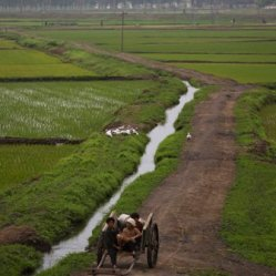North Korean farmers sit in a wagon on the outskirts of Pyongyang