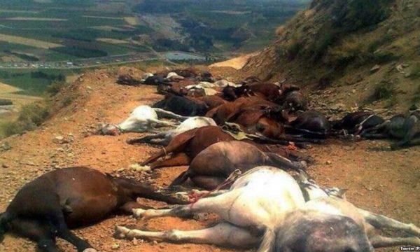 a dozen horses lying lifeless on a dirt road